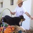 מופע כלבים לימי הולדת